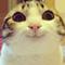 :happycat: